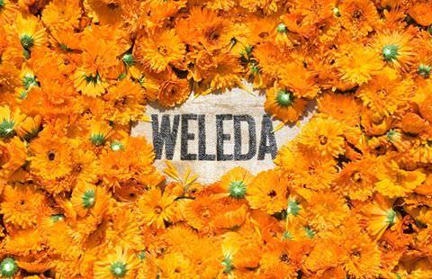 Weleda2 (1)