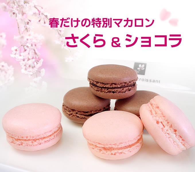 桜(さくら)&ショコラのマカロン 春限定マカロン