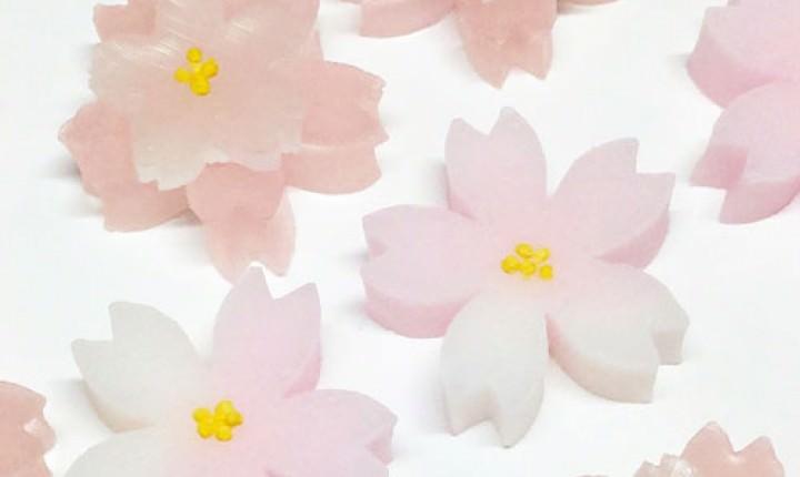 【春の和菓子】見た目も美しい!桜の和菓子は手土産にも!