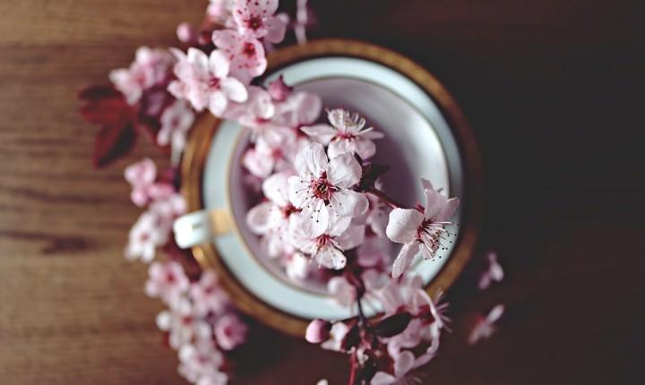 春のお祝いギフト【和の贈り物】春を感じるご挨拶の品にも